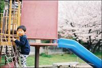 scene1463:桜の写真も桜の花と同じ - 自由時間ー至福のひとときー