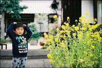 scene1464:菜の花 - 自由時間ー至福のひとときー