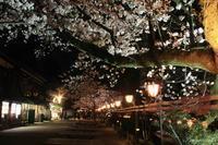 兼六園 桜 ライトアップ Vol.4 - 今日の空+α2