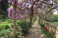 藤美しきイタリア庭園、トスカーナ歴史的邸宅 - ペルージャ イタリア語・日本語教師 なおこのブログ - Fotoblog da Perugia