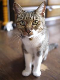 猫のお留守番 メイちゃん編。 - ゆきねこ猫家族
