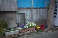 花咲く街角 170416 #4 - LOOSE