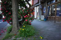 花咲く街角 170416 #5 - LOOSE