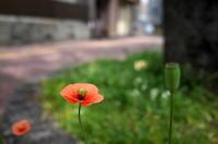 花咲く街角 170416 #6 - LOOSE