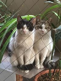 最近の猫事情19 - 鳥会えず猫生活
