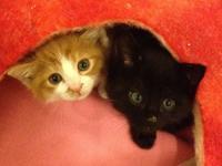 猫たちが我が家に来たいきさつ ② - Kepponen