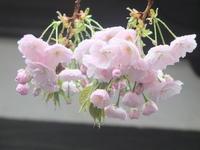 武蔵野紀行4 - はーとらんど写真感