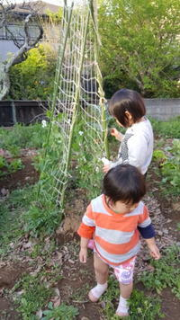 子供と畑 - 鎌倉fonteの日常