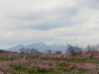 春らんまんの桃の里ウォーク2017 - 風路のこぶちさわ日記