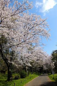 古墳と桜 - ぶらり散歩 ~四季折々フォト日記~