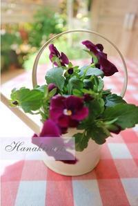 4月の花便り - 毎日がばら色