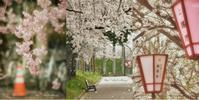 1/100万人 @高田公園 - 木の葉のオト