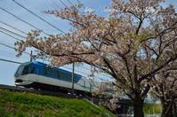 桜 - HIROのフォトアルバム