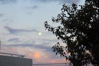 日の出の時間に西の空に沈んでいった立待月 - 生きる歓び Plaisir de Vivre。人生はつらし、されど愉しく美しく