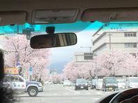 桜の季節 - 日だまりカフェ