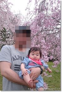 赤ちゃんアルある?難しい家族写真とお花見♪と2回食のタイミング - 素敵な日々ログ+ la vie quotidienne +
