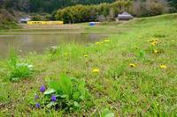 春待つ、田園風景にいすみ300形+いすみ350形 いすみ鉄道 - My B Side Life season2