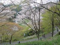 4月度写楽の会:吉野山さくら撮影会 - ようこそ「松寿奈良・生駒」へ