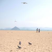 海と人と猫と鳩 - ちょこちょこ4