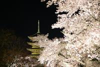 桜巡り 光の中の桜と五重塔 - 京都ときどき沖縄ところにより気まぐれ