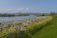 旧吉野川 - ブナの写真日記