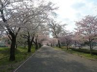 桜! - 平野部屋