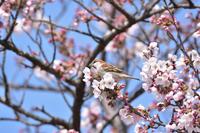 蜜を求めて - 季節の映ろひ