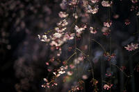 夜の中のピンク - Today's one photograph
