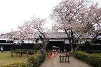 旧吉田邸 - summicron