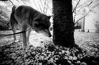 穏やかな時間 - Yoshi-A の写真の楽しみ