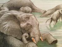 吉田遠志 の 動物絵本 14 象の家族「ふるさと」 - 象を読む人 象を書く人