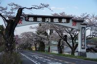 栃木景勝百選の桜並木 - 季節の風を追いかけて