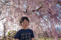 170416しだれ桜(4) - 一人の読者との対話
