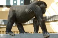 京都遠征で、モモタロウ、ゲンキ、ゲンタロウと感動のご対面(京都市動物園) - 旅プラスの日記