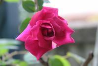 ノエラ ナボナン(草ぶえもの)17-01 - まとまりの無い庭 excite版