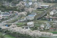 花に囲まれた道 - 2017年桜・秩父 - - ねこの撮った汽車