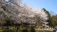 きょうの桜 4 - きょうから あしたへ その2