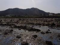 豊平川河川敷 - nshima.blog