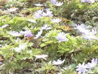 春です!春です❤ - 里山の機織りばぁば