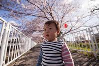 桜の下では、笑わないオトコ - Full of LIFE