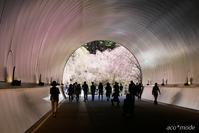桜色のトンネル - aco* mode