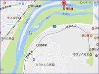 背割堤と淀川 今年の桜-2 - てんてまり@Up.town