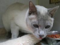 花見バーベキュー失敗&泥棒猫 - MINKWIN Cattery &Pretty Aki