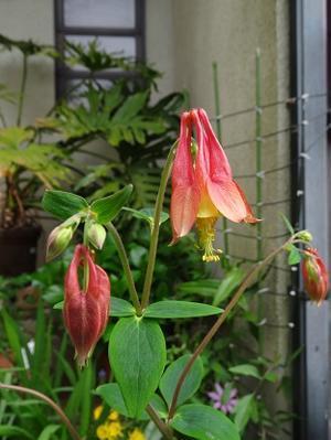 今朝の庭の記録 - free style