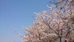 春の嵐 - ギャラリー星ケ丘