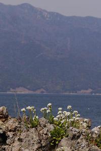 若狭も花の季節! - Beachcomber's Logbook