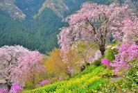 日本の春は桜の国 3 - 天野主税写遊館