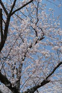 #3016 日和山公園-お花見日和 (2) - 14番目の月