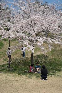 #3017 日和山公園-お花見日和 (3) - 14番目の月