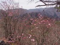三ッ岩岳・アカヤシオは咲きはじめ  2017.4.16(日) - 心のまま、足の向くまま・・・